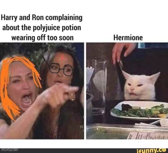 18 Top Fantastic Beasts Memes Collection