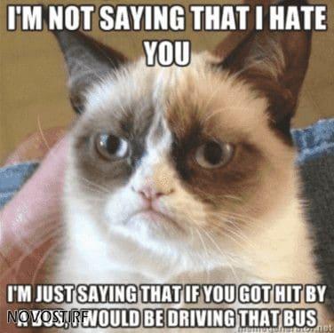 Top 18 Best Grumpy Cat Memes